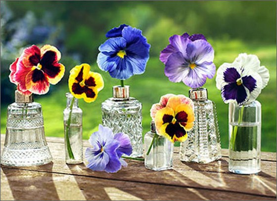 Pansies In Glass Bottles (1 card/1 envelope) - Blank Card