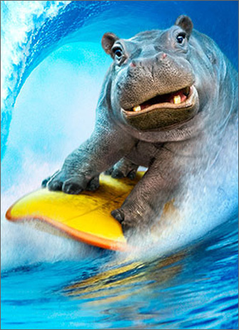 Hippo Surfing (1 card/1 envelope) Avanti Funny Birthday Card  INSIDE: Hope it's humongous! Happy Birthday