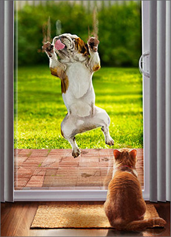 Bulldog Slides Down Sliding Glass Door (1 card/1 envelope) - Birthday Card  INSIDE: Betcha didn't see that one coming! Happy Birthday