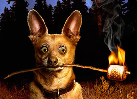 Dog With Marshmallow Stick (1 card/1 envelope) Avanti Funny Birthday Card  INSIDE: Holy Smoke! Happy Birthday