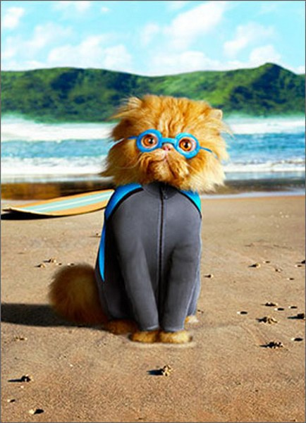 Cat In Wetsuit (1 card/1 envelope) Avanti Funny Birthday Card  INSIDE: Old enough to know better � too crazy to care! Happy Birthday