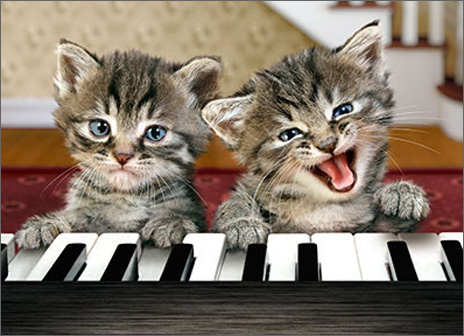 Kittens Play Piano (1 card/1 envelope) Avanti Funny Relative Birthday Card  INSIDE: Happy Birthday � from the talented one!