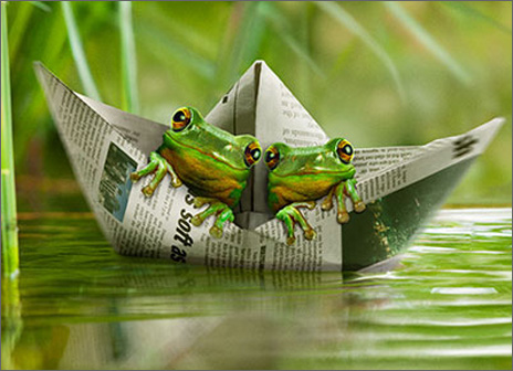 Frogs In Paper Boat (1 card/1 envelope) Avanti Friendship Card  INSIDE: Life's a journey� glad we're in it together!