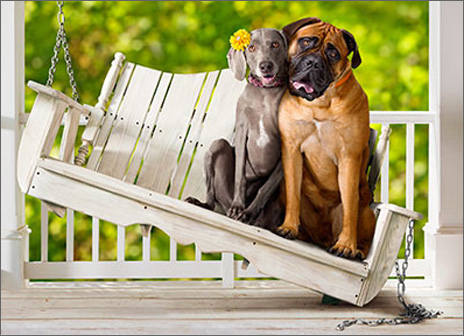 Dog Couple On Porch Swing (1 card/1 envelope) Avanti Funny Anniversary Card  INSIDE: Still hot and heavy! Happy Anniversary