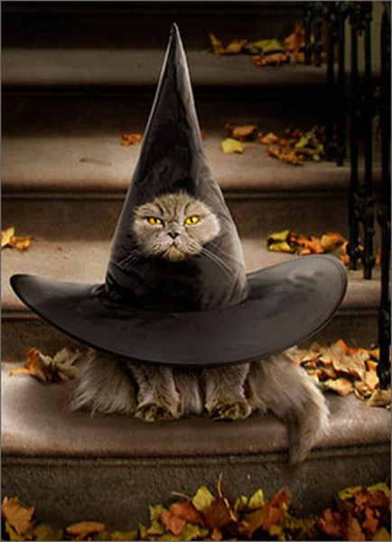 Funny Holiday Cards: Cat Inside Witch Hat Funny / Humorous Halloween Card By