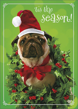 Pug Wearing Holly Wreath (1 card/1 envelope) Avanti Premium Foil Christmas Card - FRONT: 'tis the season!  INSIDE: pugs and kisses! Merry Christmas