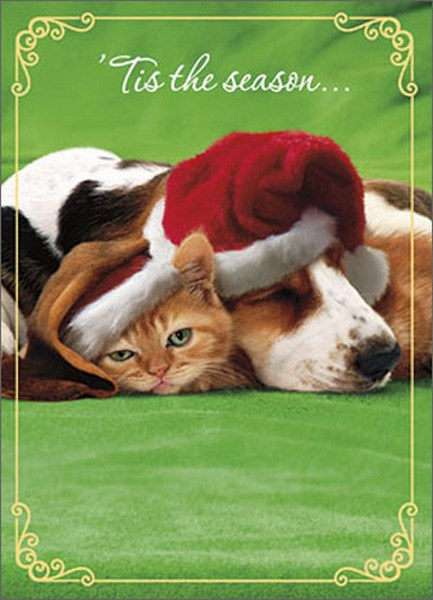 Cat Under Dog'S Ear W/Xmas Hat (1 card/1 envelope) Avanti Premium Foil Christmas Card - FRONT: 'Tis the season�  INSIDE: Wishing you a warm and cozy holiday! Merry Christmas