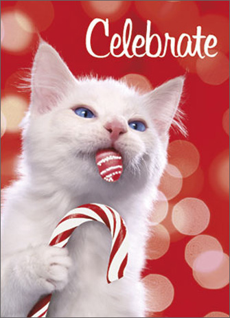 Kitten Licks Candy Cane (1 card/1 envelope) Avanti Premium Glitter and Embossed Christmas Card - FRONT: Celebrate  INSIDE: Wishing you the sweetest holiday, ever! Merry Christmas