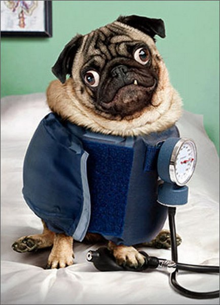 Pug Wears Blood Pressure Cuff (1 card/1 envelope) - Just For Fun Card  INSIDE: Somebody NEEDS a vacation!