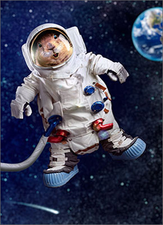 Prairie Dog Astronaut (1 card/1 envelope) Avanti Funny Birthday Card  INSIDE: Hope it's way out there! Happy Birthday