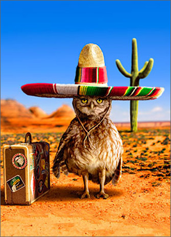 Traveling Owl With Sombrero (1 card/1 envelope) Avanti Pop-up Birthday Card  INSIDE: You don't make it this far without a few survival skills! Happy Birthday