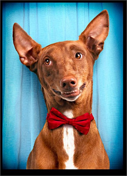 Dog With Red Bow Tie (1 card/1 envelope) - Valentine's Day Card  INSIDE: I've got it bad! Happy Valentine's Day