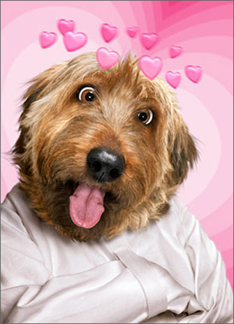 Straight Jacket Dog (1 card/1 envelope) Avanti Funny Valentine's Day Card  INSIDE: Crazy about you! Happy Valentine's Day!