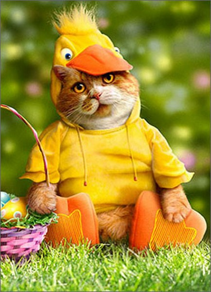 Cat In Duck Costume (1 card/1 envelope) Avanti Funny Easter Card  INSIDE: Quack! Happy Easter
