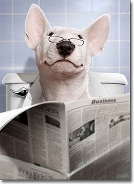 Dog/Bathroom/Newspaper (1 card/1 envelope) Avanti Funny Father's Day Card  INSIDE: �to the smartest guy I know, Happy Father�s Day!