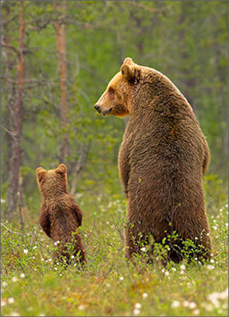Bear Father & Son (1 card/1 envelope) Avanti Funny Father's Day Card  INSIDE: Happy Father�s Day to a real stand-up guy!
