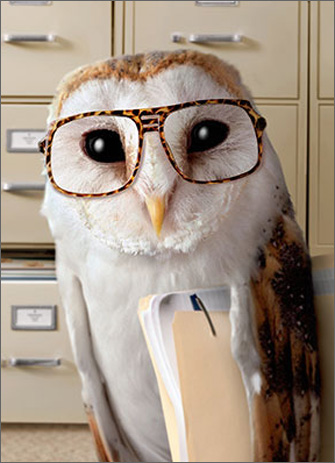 Office Owl (1 card/1 envelope) Avanti Funny Birthday Card  INSIDE: Thanks to ongoing budget cuts, looks like you'll be 10% younger this year! Happy Birthday