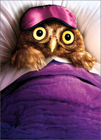 Owl Wears Sleep Mask (1 card/1 envelope) Avanti Funny Belated Birthday Card  INSIDE: I just remembered what I forgot! Happy Belated Birthday