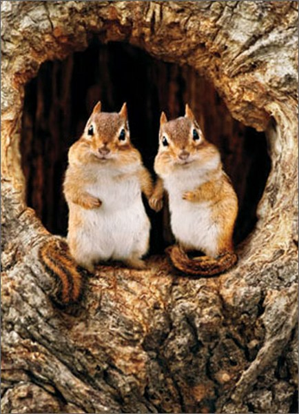 Chipmunk Couple in Tree (1 card/1 envelope) - Romantic Card  INSIDE: You make me feel all warm & fuzzy!