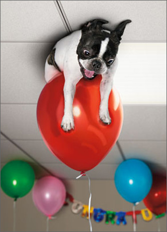 Dog on Ceiling with Balloon (1 card/1 envelope) Avanti Stand Out Pop Up Birthday Card  INSIDE: Pop!  You do bring a certain �something� to the party! Happy Birthday