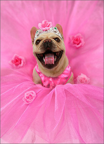 Frenchie Ballerina (1 card/1 envelope) Avanti Stand Out Pop Up Birthday Card  INSIDE: Love you bunches! Happy Birthday