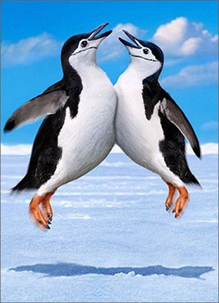 Penguin Chest Bump (1 card/1 envelope) Avanti Funny Birthday Card  INSIDE: BOOYAH! Happy Birthday