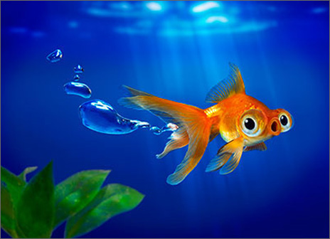 Goldfish Bubbles (1 card/1 envelope) Avanti Funny Birthday Card  INSIDE: Pull my fin! Happy Birthday