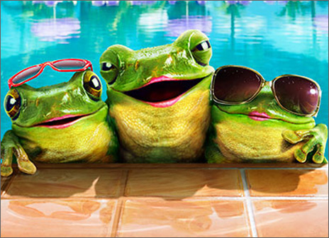Frogs At Poolside Juice Bar (1 card/1 envelope) Avanti Funny Birthday Card  INSIDE: You've still got the best legs in the group! Happy Birthday