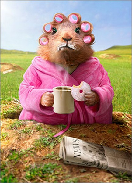 Morning Ground Hog (1 card/1 envelope) Avanti Funny Just for Fun Card  INSIDE: Another day� another donut!