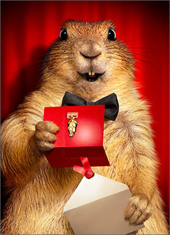 Prairie Dog Opens Envelope (1 card/1 envelope) Avanti Funny Congratulations Card  INSIDE: Congratulations!