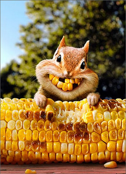 Chipmunk Corn Teeth (1 card/1 envelope) Avanti Funny Friendship Card  INSIDE: You make me thmile!