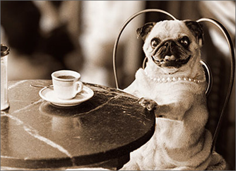 Cafe Pug (1 card/1 envelope) - Birthday Card  INSIDE: Have I told you lately how fabulous you are?! Happy Birthday