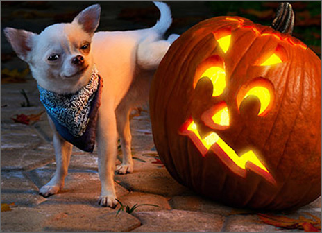 Dog Lifting Leg On Pumpkin (1 card/1 envelope) Avanti Funny Halloween Card  INSIDE: Hand over the candy or the pumpkin gets it! Happy Halloween