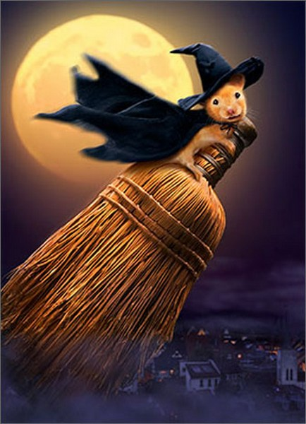 Witch Mouse On Broom (1 card/1 envelope) Avanti Funny Halloween Card  INSIDE: Short and sweet� Trick or Treat!