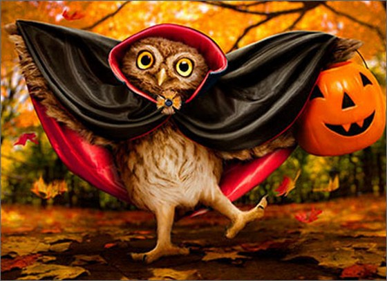 Vampire Owl Trick-Or-Treater (1 card/1 envelope) Avanti Funny Halloween Card  INSIDE: I love you… THIS MUCH! Happy Halloween
