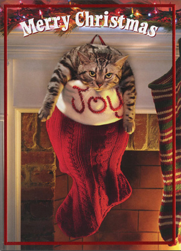 Fat Cat In Stocking Premium (1 card/1 envelope) Avanti Funny Premium Christmas Card - FRONT: Merry Christmas  INSIDE: May your stocking runneth over!