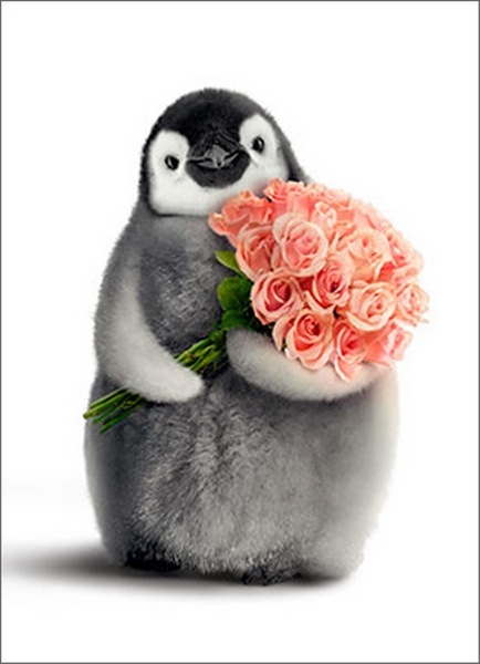 Penguin With Flower Bouquet (1 card/1 envelope) Avanti Funny Valentine's Day Card  INSIDE: Love you a bunch! Happy Valentine's Day