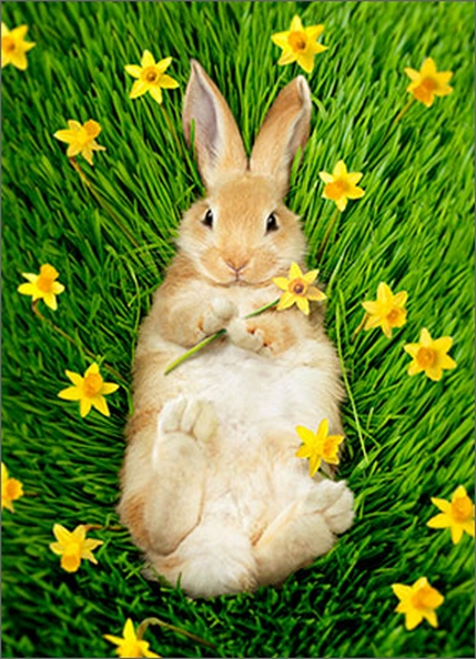 Bunny In Daffodils (1 card/1 envelope) Avanti Easter Card  INSIDE: Warm and fuzzy wishes for a very Happy Easter!