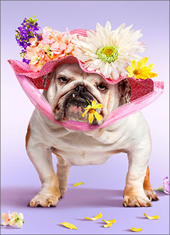 Bulldog Bonnett (1 card/1 envelope) Avanti Funny Dog Easter Card  INSIDE: Happy Easter Yourself!