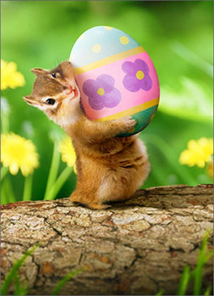 Chipmunk Holding Easter Egg (1 card/1 envelope) - Easter Card  INSIDE: XOXOX! Happy Easter