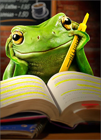 Frog Studying (1 card/1 envelope) Avanti Funny Graduation Card  INSIDE: Happy Graduation!