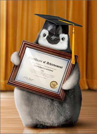 Penguin Graduate (1 card/1 envelope) Avanti Funny Graduation Card  INSIDE: Most Excellent!