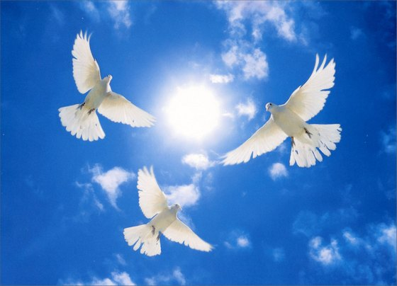 Three White Doves Circling (1 card/1 envelope) - Sympathy Card - FRONT: No text  INSIDE: Wishing you love and peace at this difficult time - With deepest sympathy..