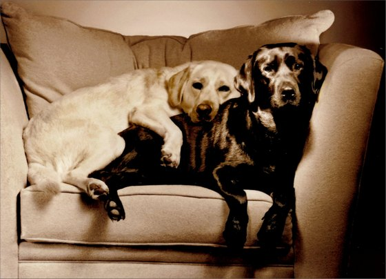 2 Labs in Overstuffed Chair (1 card/1 envelope) - Love Card - FRONT: No text  INSIDE: I love doing nothing, as long as it's with you!
