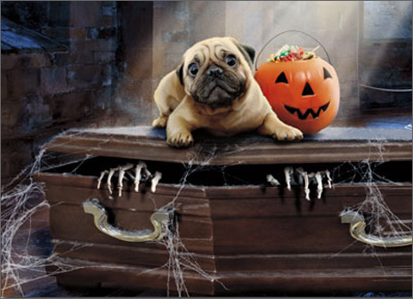 Dog On Coffin Standout (1 card/1 envelope) Avanti Stand Out Pop Up Pug Halloween Card  INSIDE: Grab the treats and GO! Happy Halloween