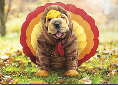 Turkey Dog (1 card/1 envelope) - Thanksgiving Card  INSIDE: I'm all about the dressing! Happy Thanksgiving