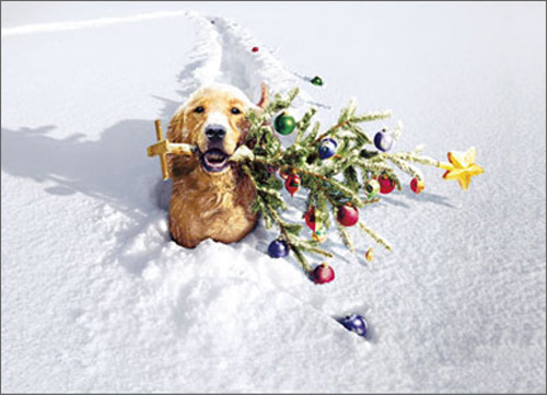Dog with Tree In Snow Stand Out (1 card/1 envelope) Avanti Pop Up Golden Retriever Christmas Card  INSIDE: Warm Wishes - Special Delivery for a very Merry Christmas!