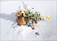 Dog with Tree In Snow Stand Out (1 card/1 envelope) - Christmas Card  INSIDE: Warm Wishes - Special Delivery for a very Merry Christmas!