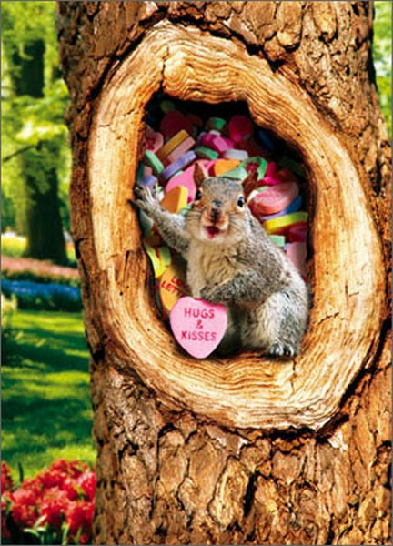 Squirrel In Tree With Candy Heart (1 card/1 envelope) Avanti Stand Out Pop Up Valentine's Day Card  INSIDE: Love You Happy Valentine's Day