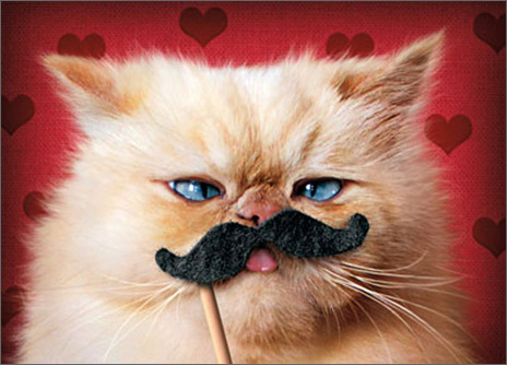 Luna the Fashion Kitty Moustache (1 card/1 envelope) - Valentine's Day Card  INSIDE: I mustache you� will you be mine? Happy Valentine's Day